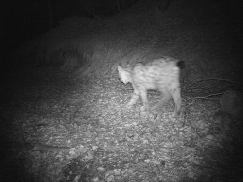 Lince 19/04/2010